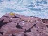 Seagulls on the Ledge_5878 web